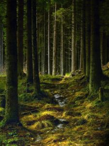 Norway forest